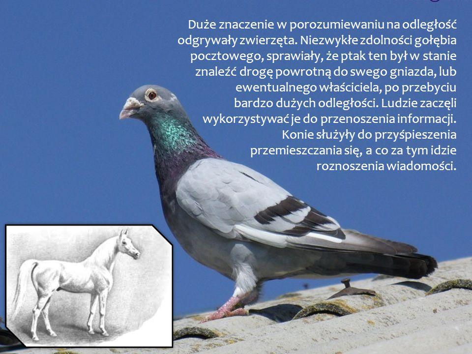 Duże znaczenie w porozumiewaniu na odległość odgrywały zwierzęta