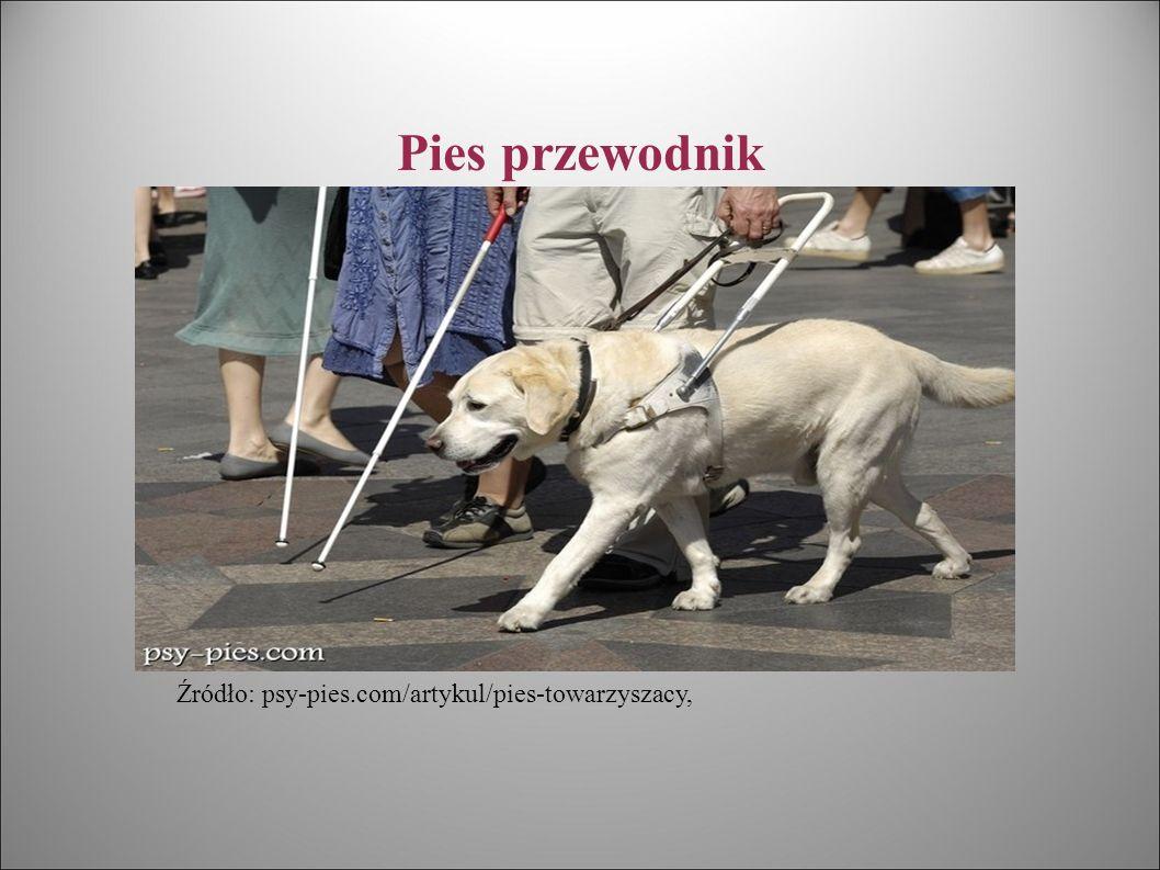 Pies przewodnik Źródło: psy-pies.com/artykul/pies-towarzyszacy,