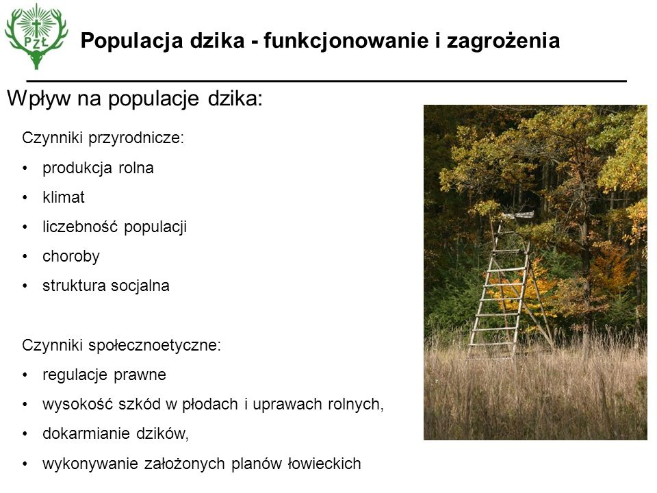 Populacja dzika - funkcjonowanie i zagrożenia
