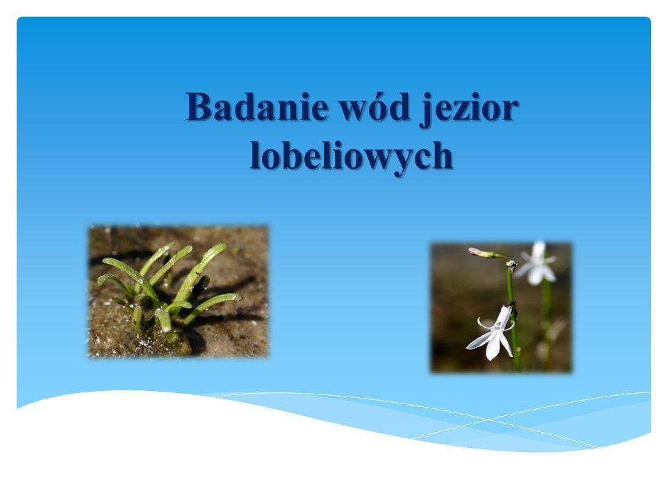 Badanie wód jezior lobeliowych