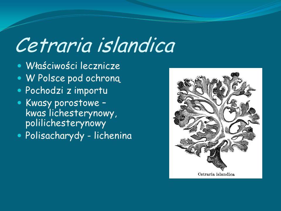 Cetraria islandica Właściwości lecznicze W Polsce pod ochroną
