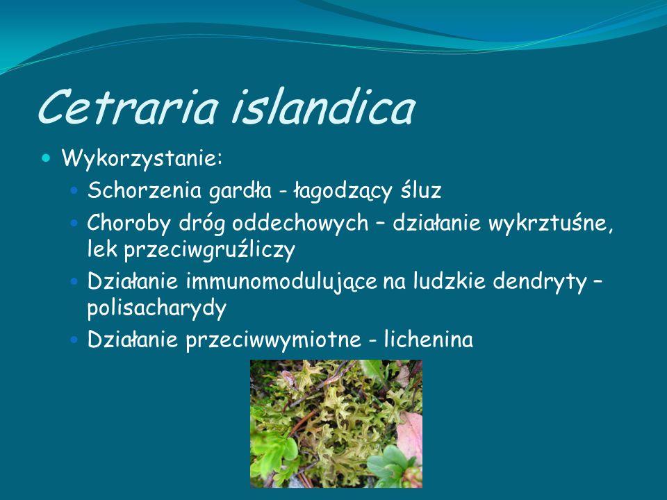 Cetraria islandica Wykorzystanie: Schorzenia gardła - łagodzący śluz
