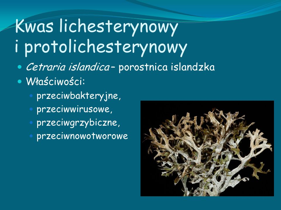 Kwas lichesterynowy i protolichesterynowy