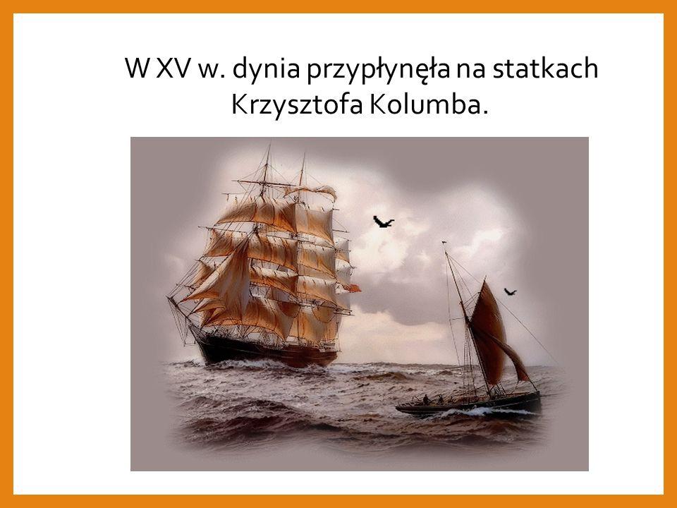 W XV w. dynia przypłynęła na statkach Krzysztofa Kolumba.