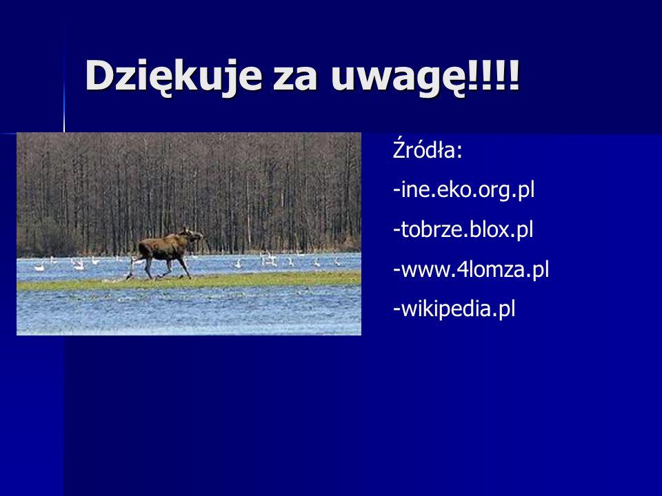 Dziękuje za uwagę!!!! Źródła: -ine.eko.org.pl -tobrze.blox.pl