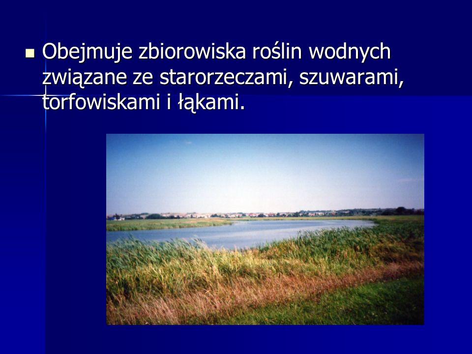 Obejmuje zbiorowiska roślin wodnych związane ze starorzeczami, szuwarami, torfowiskami i łąkami.