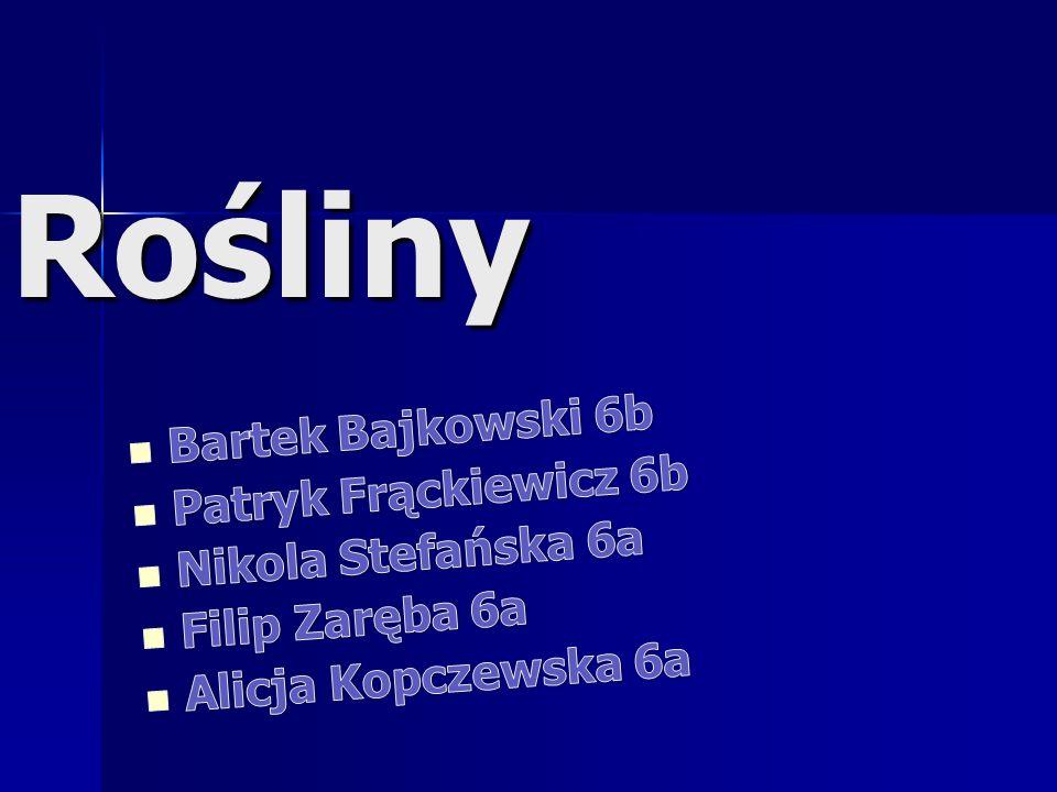 Rośliny Bartek Bajkowski 6b Patryk Frąckiewicz 6b Nikola Stefańska 6a