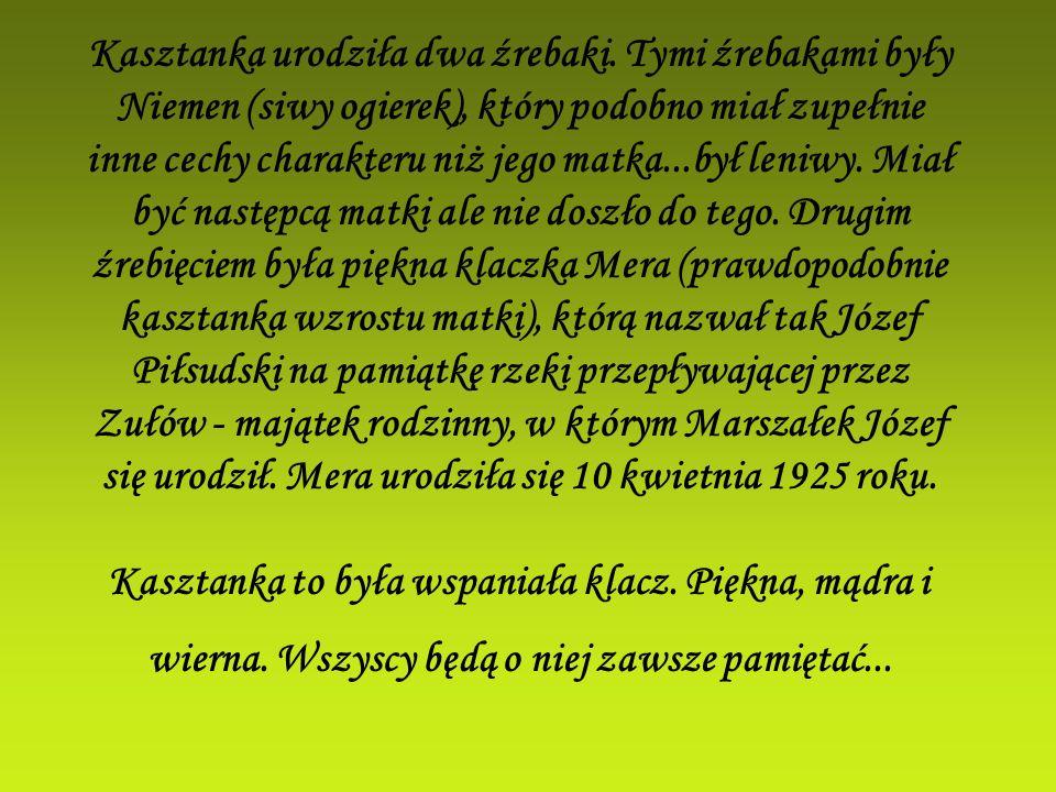 Kasztanka urodziła dwa źrebaki