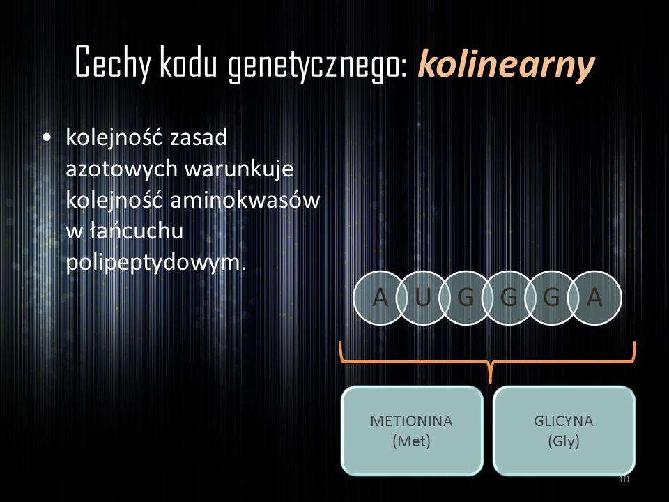 Cechy kodu genetycznego: kolinearny