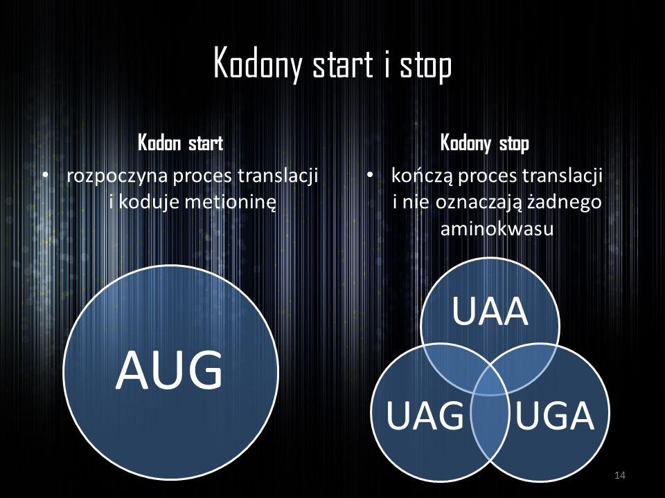 Kodony start i stop Kodon start Kodony stop