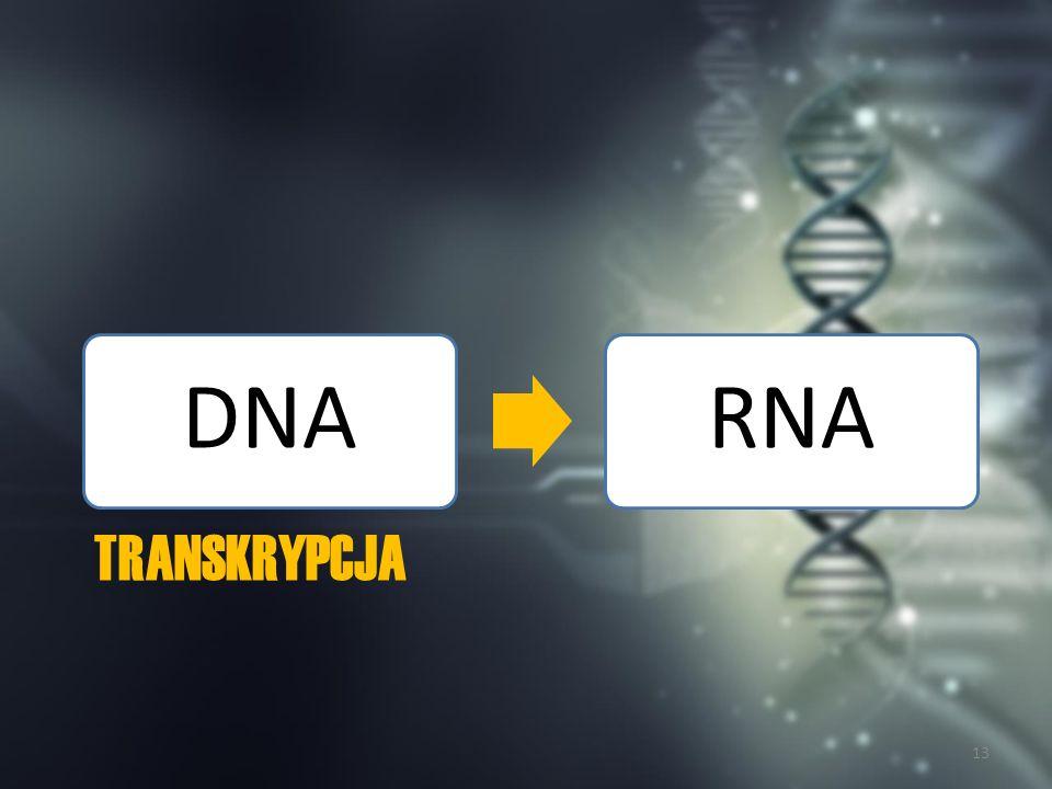 DNA RNA Transkrypcja