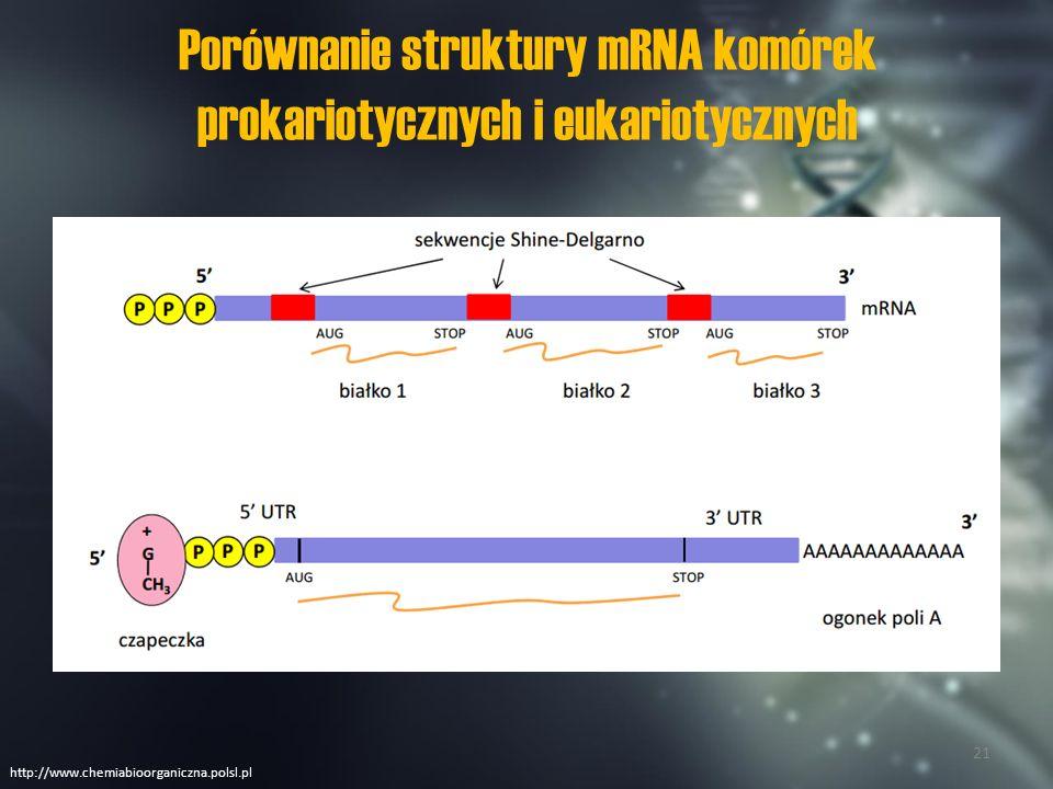 Porównanie struktury mRNA komórek prokariotycznych i eukariotycznych