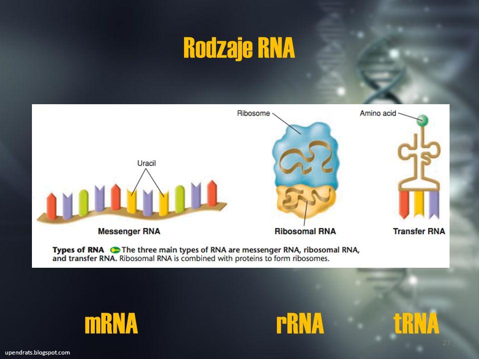 Rodzaje RNA mRNA rRNA tRNA upendrats.blogspot.com