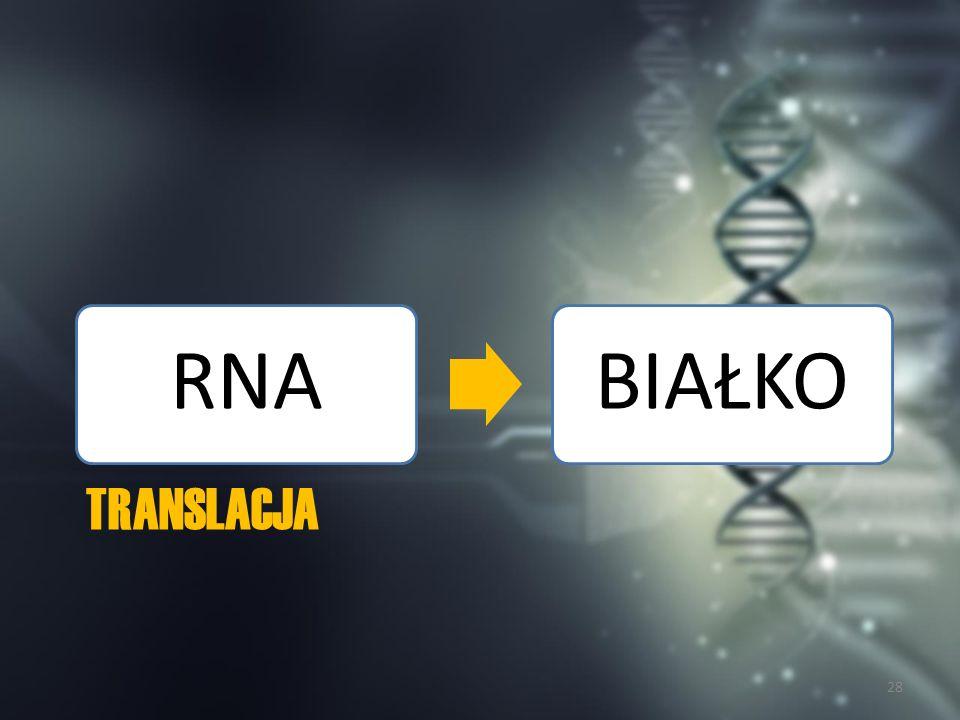 RNA BIAŁKO Translacja