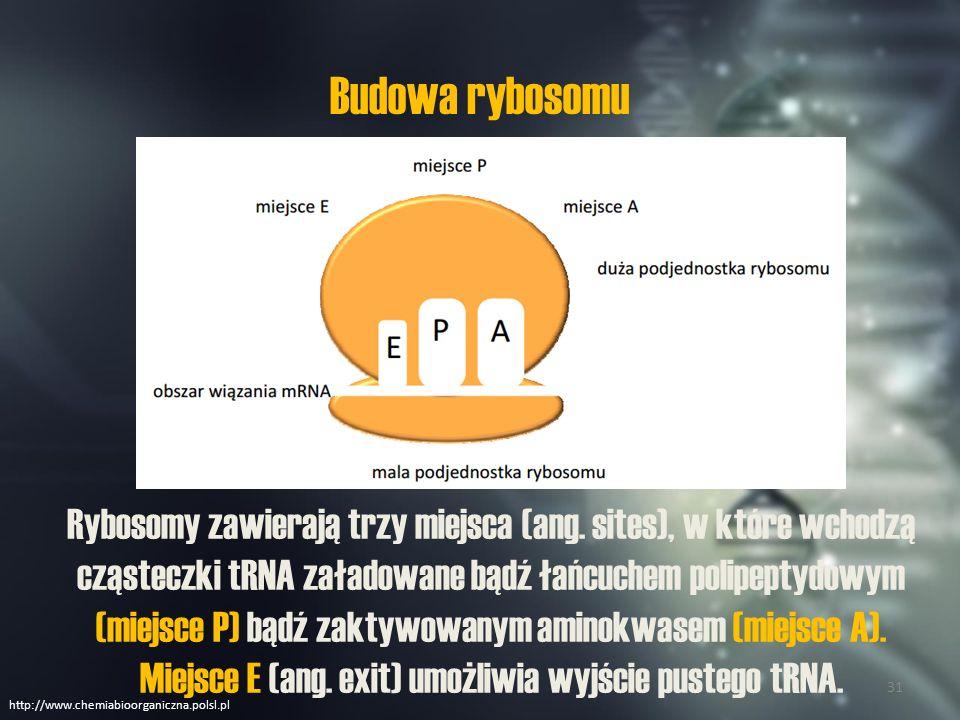Budowa rybosomu