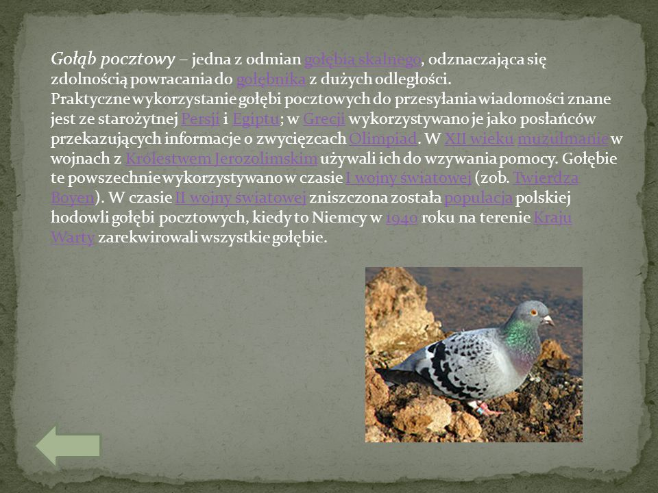 Gołąb pocztowy – jedna z odmian gołębia skalnego, odznaczająca się zdolnością powracania do gołębnika z dużych odległości.