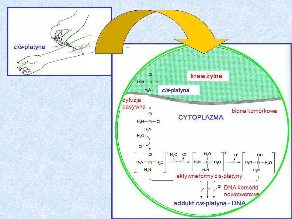 addukt cis-platyna - DNA krew żylna