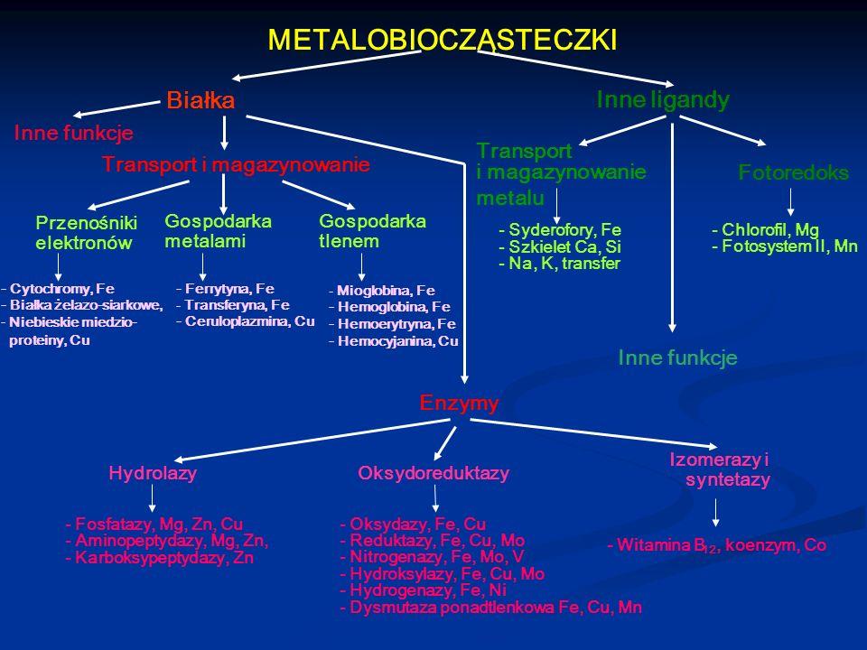 METALOBIOCZĄSTECZKI Białka Inne ligandy Inne funkcje Transport