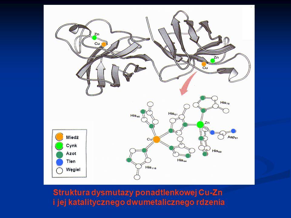 Struktura dysmutazy ponadtlenkowej Cu-Zn