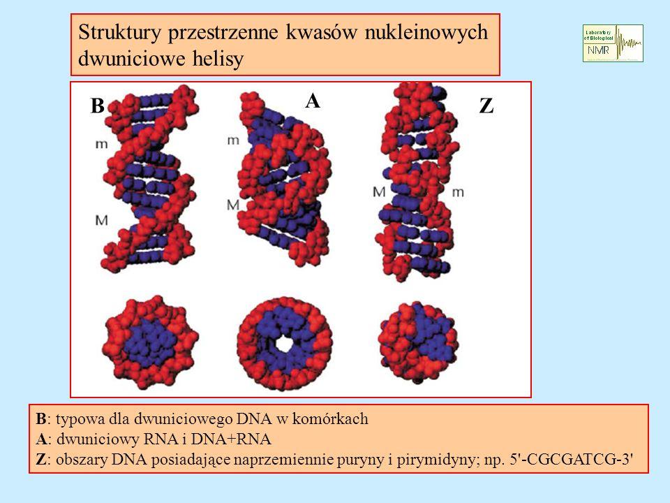 Struktury przestrzenne kwasów nukleinowych dwuniciowe helisy