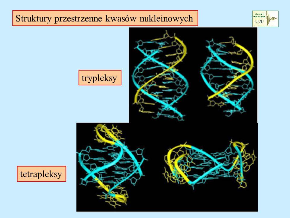 Struktury przestrzenne kwasów nukleinowych