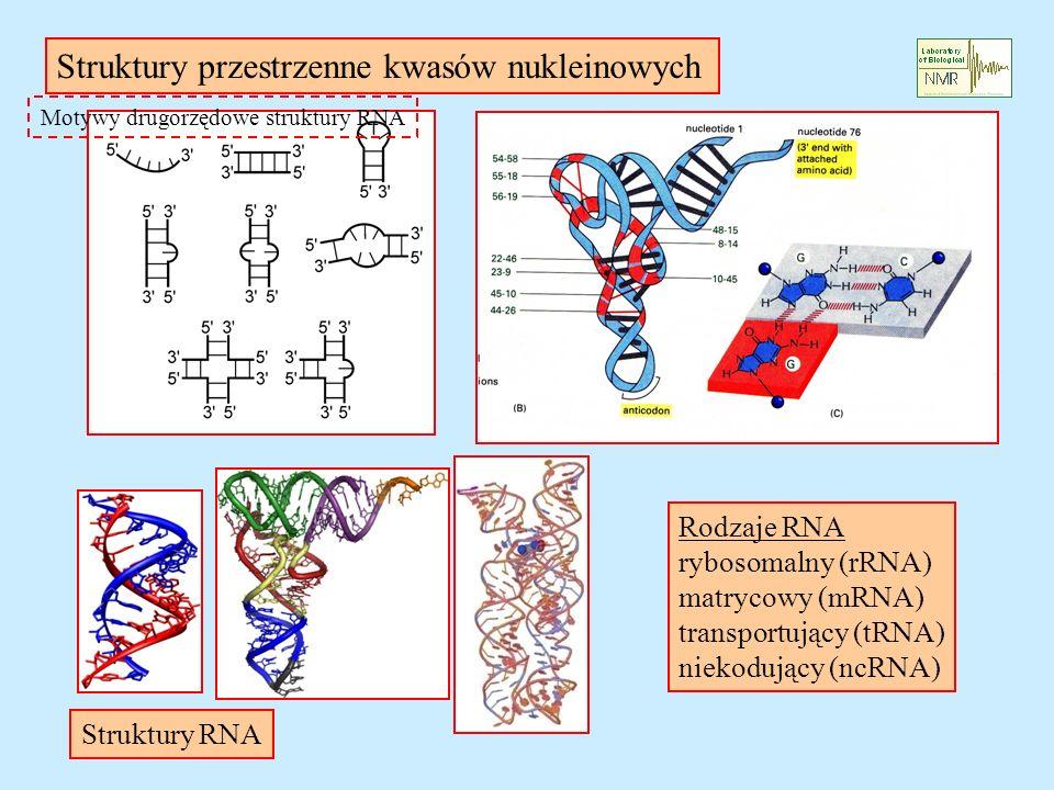 Motywy drugorzędowe struktury RNA