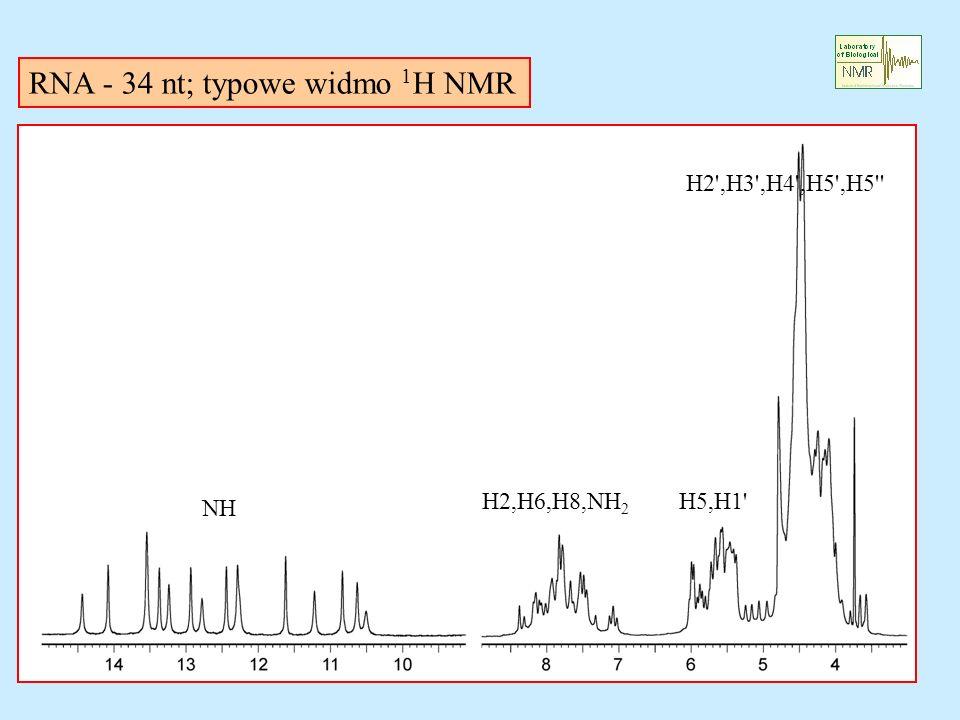 RNA - 34 nt; typowe widmo 1H NMR