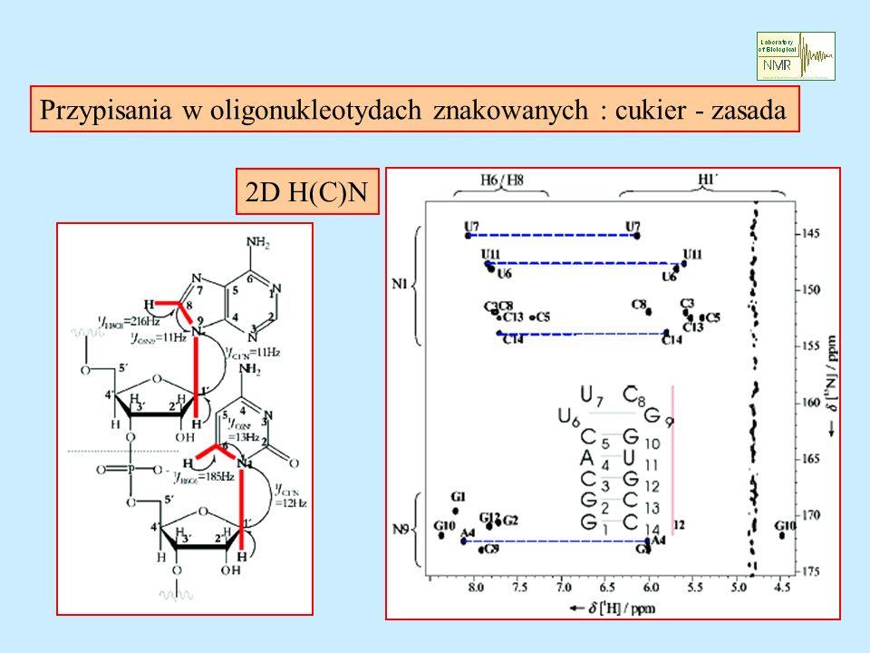 Przypisania w oligonukleotydach znakowanych : cukier - zasada