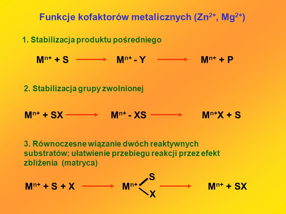 Funkcje kofaktorów metalicznych (Zn2+, Mg2+)