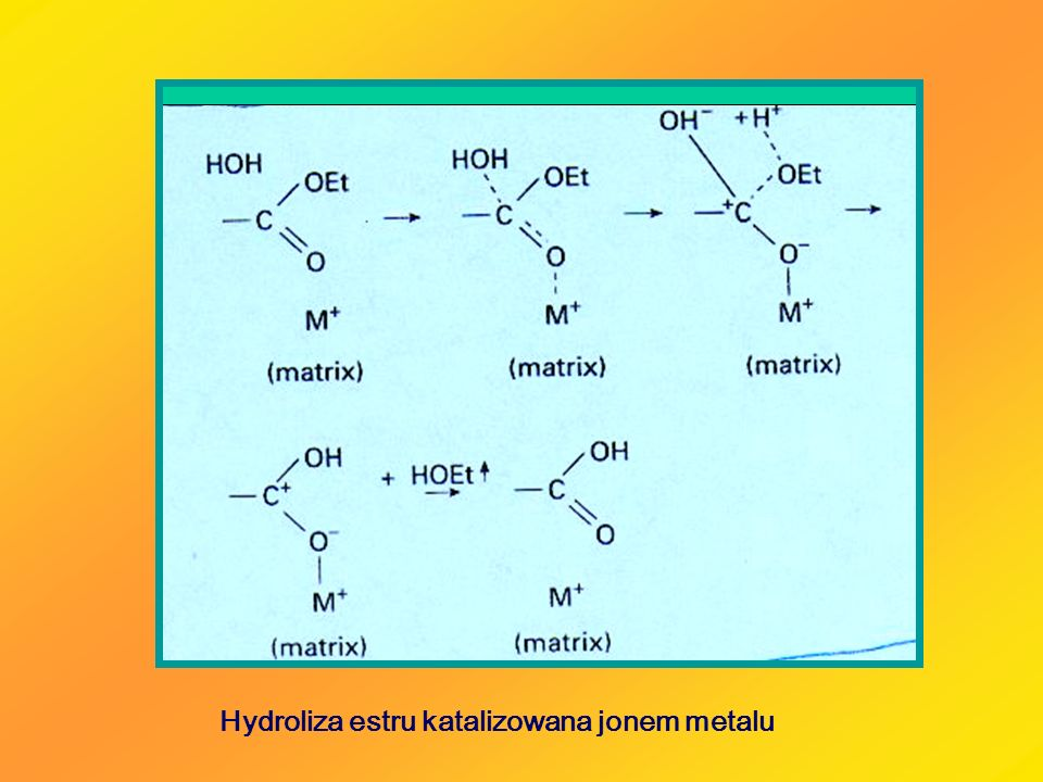 Hydroliza estru katalizowana jonem metalu