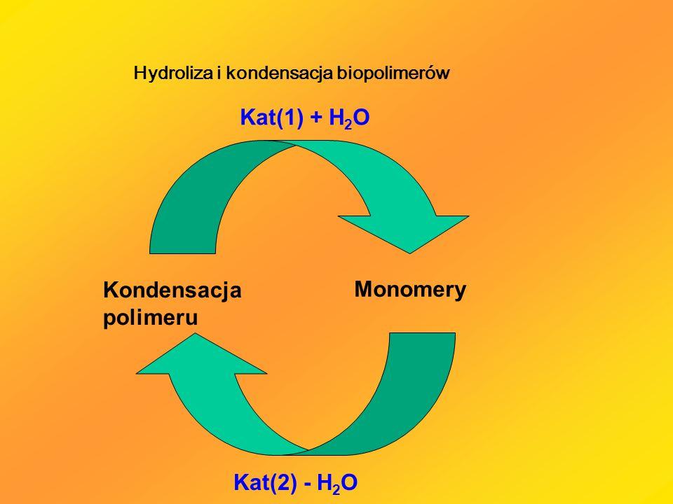 Kat(1) + H2O Kondensacja polimeru Monomery Kat(2) - H2O