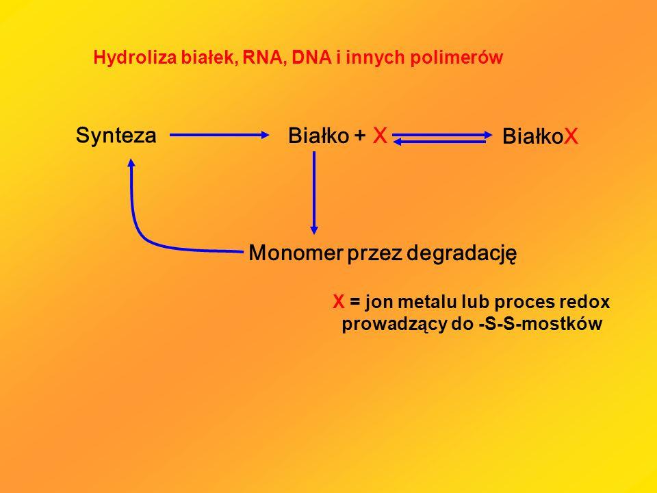 Monomer przez degradację Białko + X BiałkoX