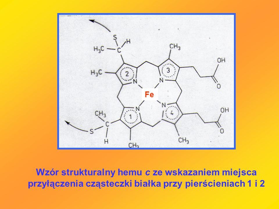 Fe Wzór strukturalny hemu c ze wskazaniem miejsca przyłączenia cząsteczki białka przy pierścieniach 1 i 2.