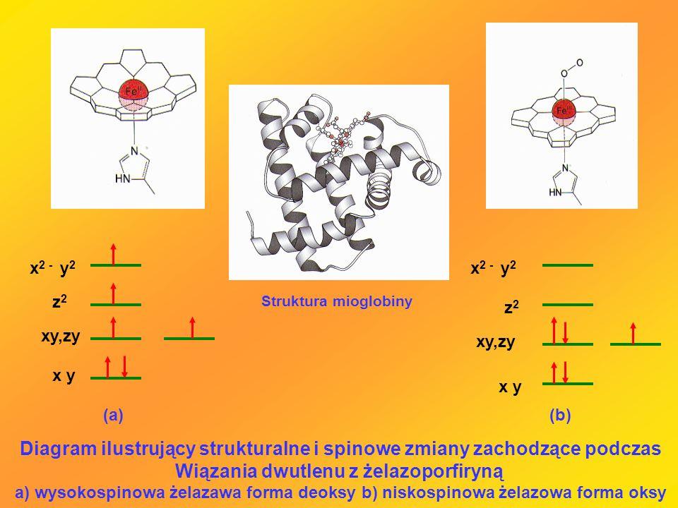 Diagram ilustrujący strukturalne i spinowe zmiany zachodzące podczas
