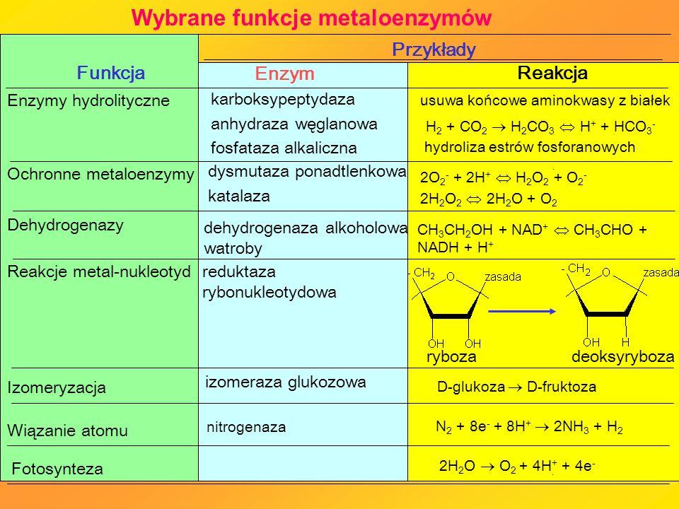 Wybrane funkcje metaloenzymów