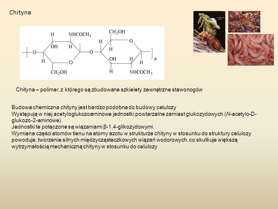 Chityna Chityna – polimer, z którego są zbudowane szkielety zewnętrzne stawonogów. Budowa chemiczna chityny jest bardzo podobna do budowy celulozy.