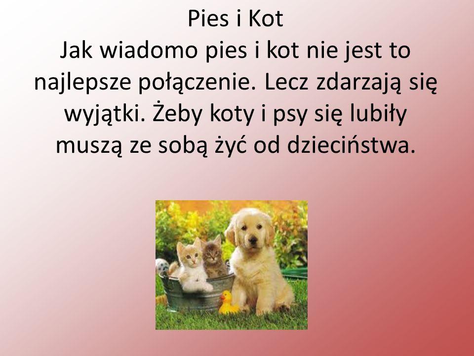 Pies i Kot Jak wiadomo pies i kot nie jest to najlepsze połączenie