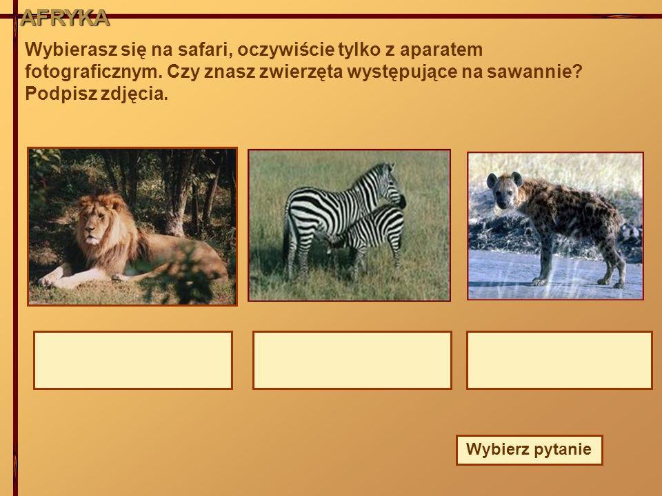 AFRYKA Wybierasz się na safari, oczywiście tylko z aparatem fotograficznym. Czy znasz zwierzęta występujące na sawannie Podpisz zdjęcia.