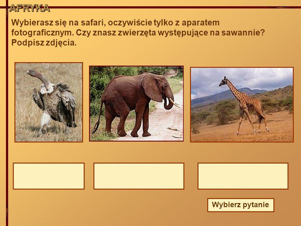 AFRYKA AFRYKA. Wybierasz się na safari, oczywiście tylko z aparatem fotograficznym. Czy znasz zwierzęta występujące na sawannie Podpisz zdjęcia.
