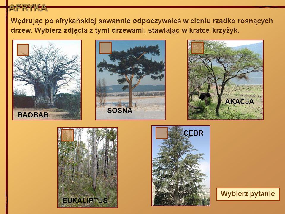 AFRYKA Wędrując po afrykańskiej sawannie odpoczywałeś w cieniu rzadko rosnących drzew. Wybierz zdjęcia z tymi drzewami, stawiając w kratce krzyżyk.