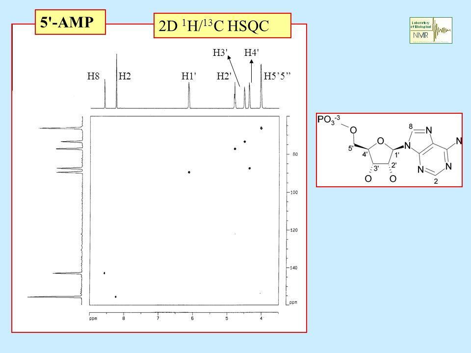 5 -AMP 2D 1H/13C HSQC H3 H4 H8 H2 H1 H2 H5'5''