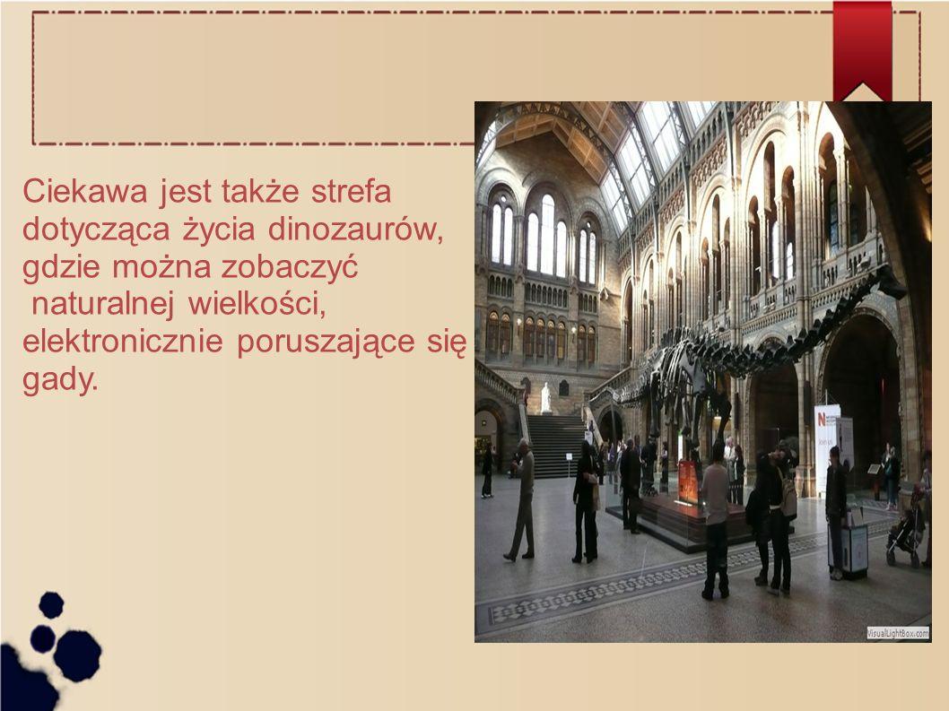 Ciekawa jest także strefa dotycząca życia dinozaurów, gdzie można zobaczyć