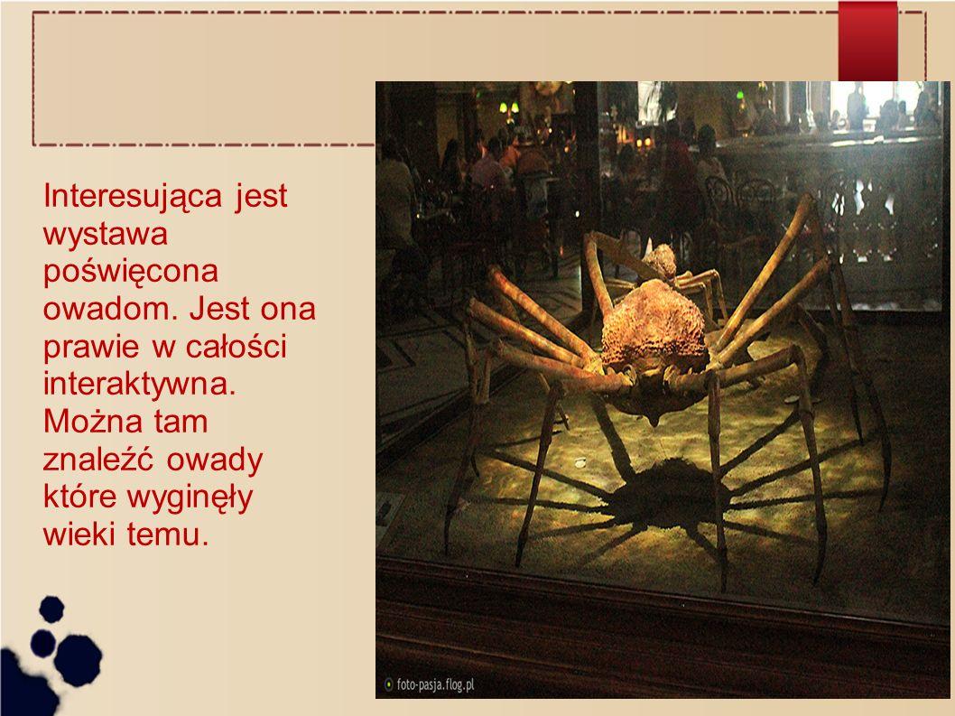 Interesująca jest wystawa poświęcona owadom
