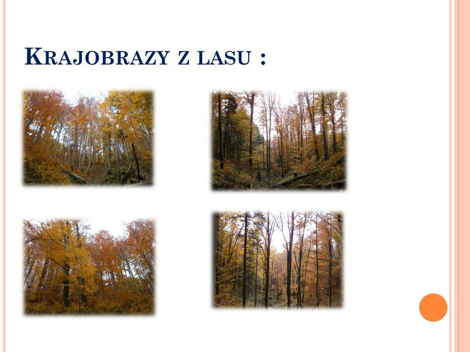 Krajobrazy z lasu :