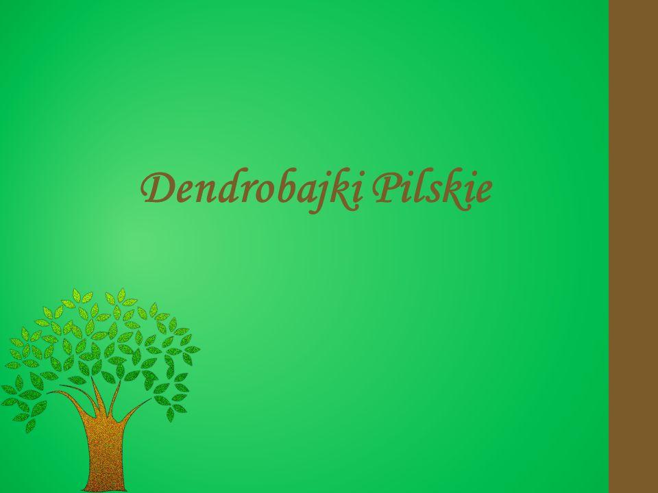 Dendrobajki Pilskie