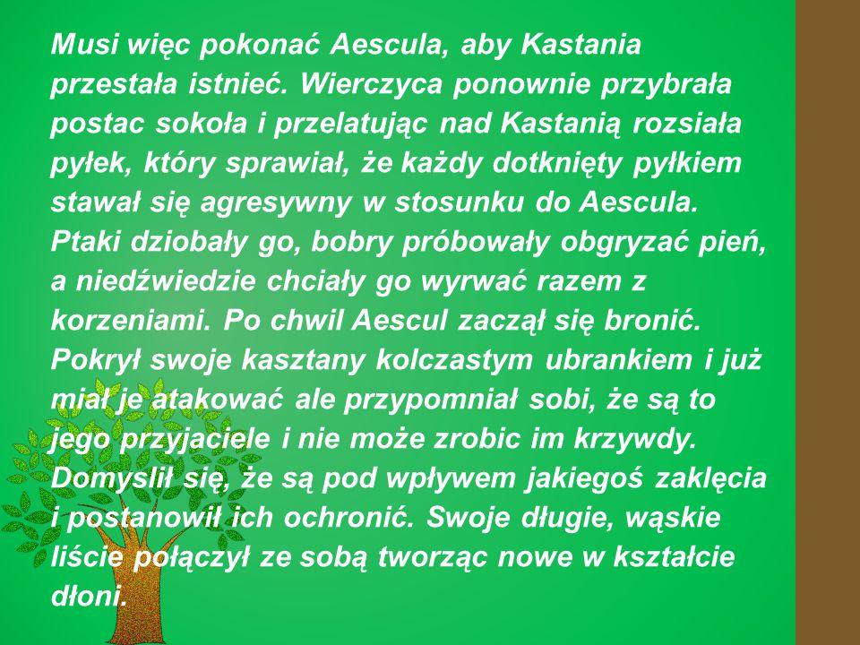 Musi więc pokonać Aescula, aby Kastania