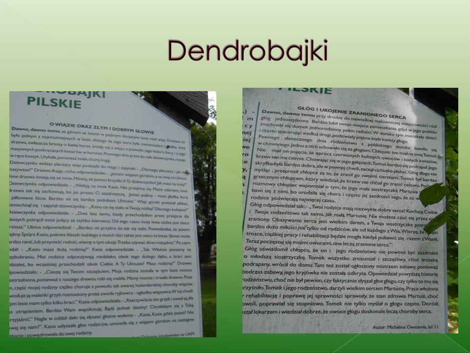 Dendrobajki