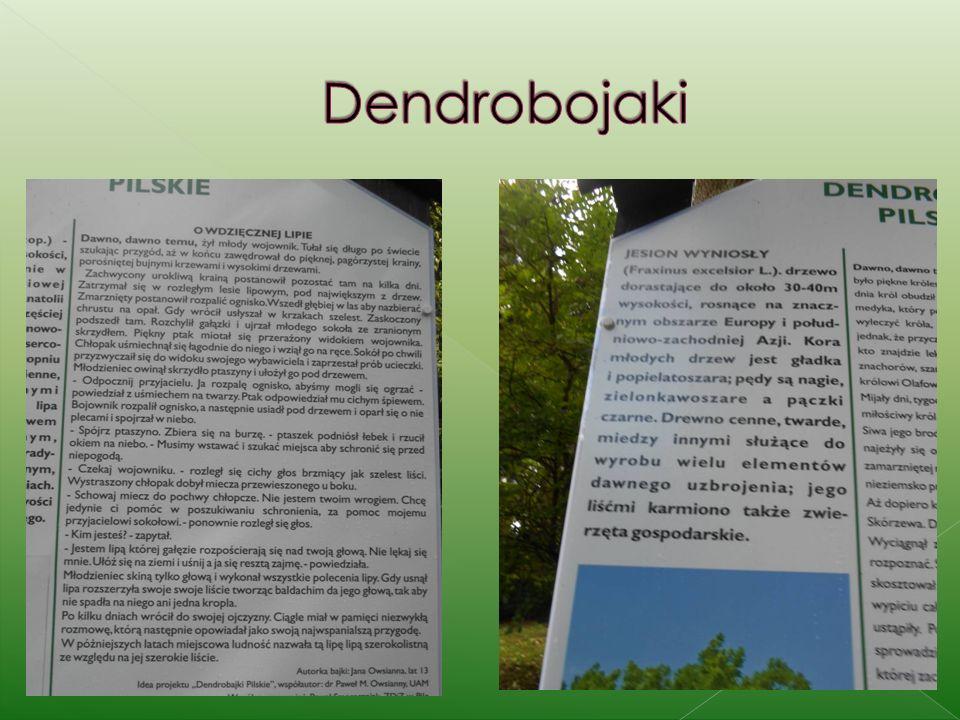 Dendrobojaki