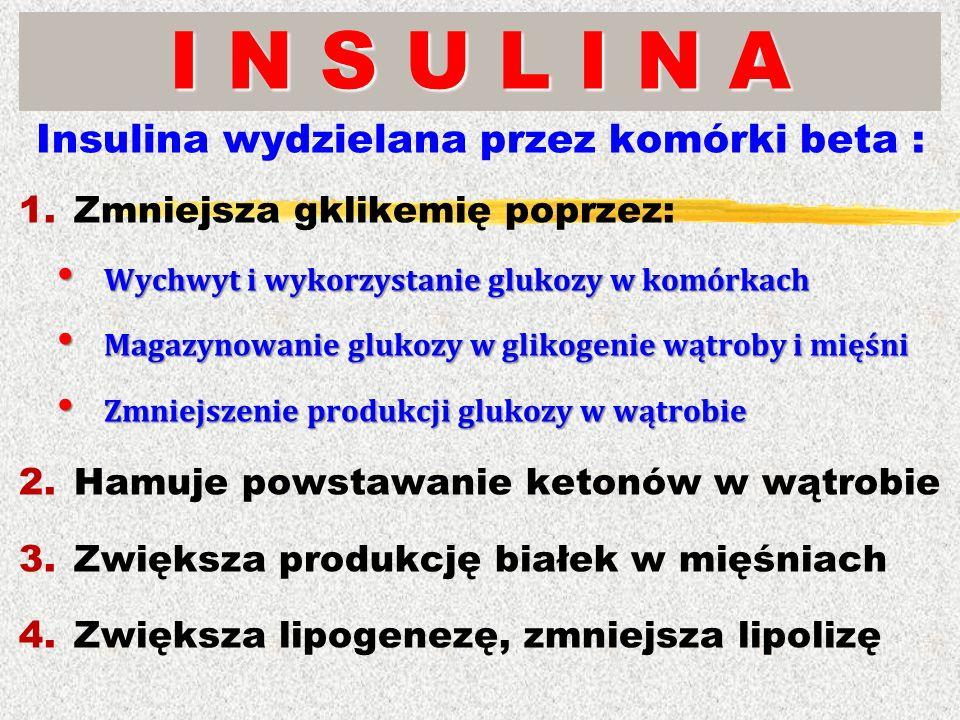 Insulina wydzielana przez komórki beta :