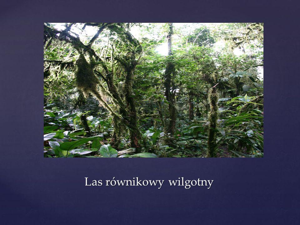 Las równikowy wilgotny
